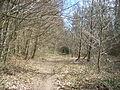 Old Down Wood 12.JPG