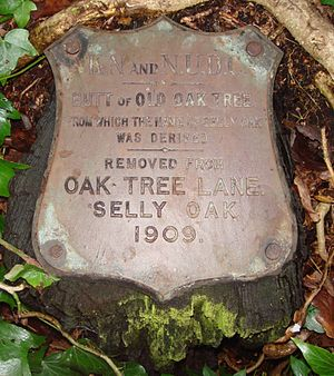"Selly Oak - Brass plaque that reads ""Butt of Old Oak Tree from which the name of Selly Oak was derived"
