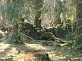 Old mossy wall through the forest - geograph.org.uk - 691399.jpg