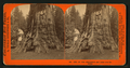 One of the Sentinels, and house over the stump, by Lawrence & Houseworth.png