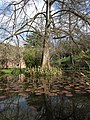 Orto Botanico Lucca laghetto.jpg