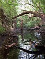 Overgrown brook (1) - geograph.org.uk - 1276911.jpg