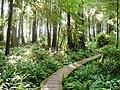 Ozette trail boardwalk - panoramio.jpg