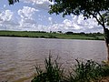 Pé de manga - represa - Cosmópolis SP - panoramio.jpg