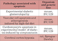 P66 involvement in pathologies.png