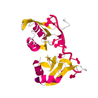Poly(A)-binding protein - RRM 1 and 2 connected by a short linker showing binding to the polyadenylate RNA.