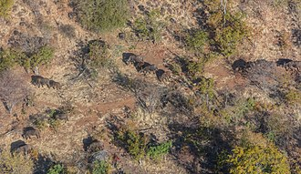 Mosi-oa-Tunya National Park - Aerial view of the park with a herd of buffalos.