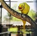 Parrot's lunch.jpg