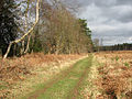 Path past clearing - geograph.org.uk - 1203437.jpg
