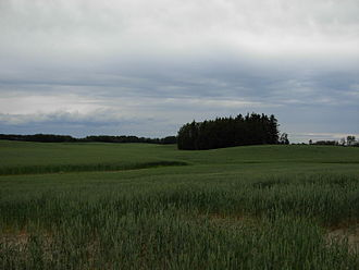 Municipal District of Peace No. 135 - Grain fields in the Peace Country.