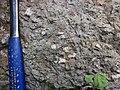Pedogenic breccia (Conemaugh Group, Upper Pennsylvanian; creek cut on the western side of Caldwell, Ohio, USA) 10.jpg