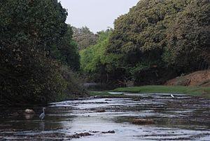 Wildlife of Benin - Image: Pendjari Fluss