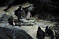 Penguins (39808878744).jpg