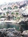 Penguins Loro Parque 11.jpg