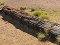 Petrified Forest National Park 3.jpg