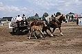Pferdesportveranstaltung in Seifersdorf (Jahnsdorf) .. 2H1A7959WI.jpg