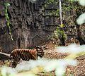 Photograph taken at Rajiv gandhi Zoological park pune.jpg