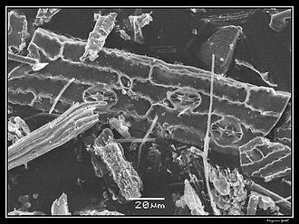 Phytolith - Image: Phytolithes observés au Microscope Electronique à Balayage 04