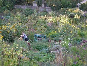 The Picardo Farm P-Patch community garden in Wedgwood.