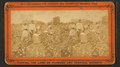 Picking cotton, from Robert N. Dennis collection of stereoscopic views 5.png