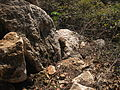 PikiWiki Israel 11929 Banias Nature Reserve.JPG