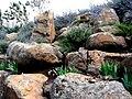 PikiWiki Israel 2550 Geography of Israel מסלעה.JPG
