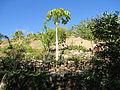 PikiWiki Israel 29427 Botanical garden of Eilat.JPG