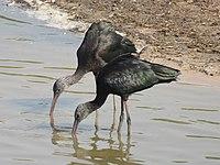 PikiWiki Israel 53073 wildlife animals.jpg