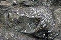 Pillow basalts (Franciscan Complex, Jurassic; Point Bonita, California, USA) 25 (47262916441).jpg