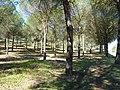 Pinar de Bornos P1090768.jpg