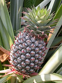 Fresh Pineapple Gives Your Health a Boost