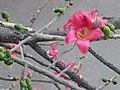 Pinkflower sk.jpg