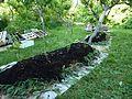 Plantation sur lasagnes entre les arbres.jpg