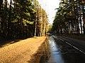 Pludi druvciema 2011 - panoramio (38).jpg