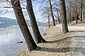 Poertschach Halbinselpromenade Landspitz 23022015 4929.jpg