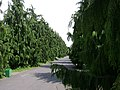 Poland. Warsaw. Powsin. Botanical Garden 102.jpg