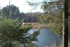 Wilderness - Perkuć Reserve in Puszcza Augustowska, Poland