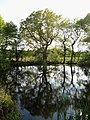 Pond near Round Wood - geograph.org.uk - 1289875.jpg