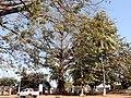 Praça D. Luís I, Bolama, Guiné-Bissau – 2018-03-02 – DSCN1052.jpg