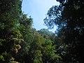 Prašuma na sjeveroistoku Kambodže.jpg