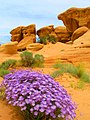 Purple Flowers and Hoodoos in Devil's Garden DyeClan.com - panoramio.jpg