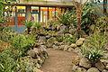 Quitos botaniska trädgård-IMG 8892.JPG