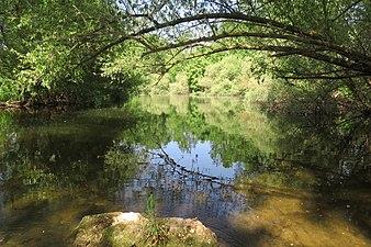Río Arlanzón 2.jpg