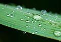 Rain drops close-up (8446623121).jpg