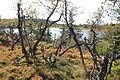Raudsteinsvannet ved Torseterkampen på Totenåsen.jpg