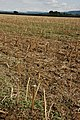 Recently harvested field - geograph.org.uk - 920148.jpg