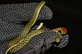 Red-necked Keelback (Rhabdophis subminiatus) 紅脖游蛇9.jpg