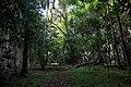 Reserva Ecológica Limones-Tuabaquey CF9A3447.jpg