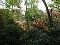 Rhododendron Gardens, Plas Newydd - geograph.org.uk - 1294796.jpg