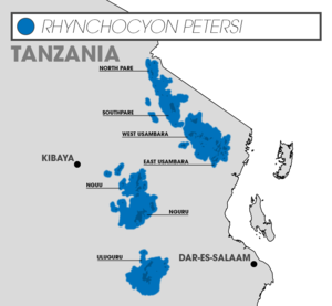 Black and rufous elephant shrew - Distribution of Rhynchocyon petersi in Tanzania. The species is typically limited to small, fragmented forest patches (darker blue) within the Eastern Arc Mountains (blue).